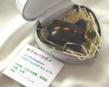 地球の玉手箱 セマルハコガメ 亀茶会09年6月