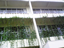 緑環堂のスローライフ-green