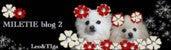 ☆Dress up Pome☆-レオティガブログ