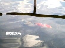 *となりのこころ*-鯉