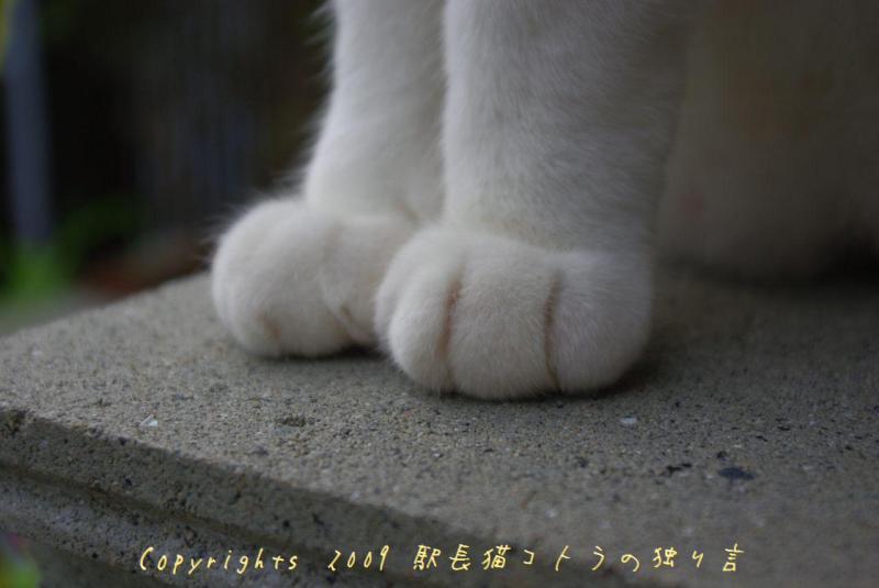 駅長猫コトラの独り言~旧 片上鉄道 吉ヶ原駅勤務~-ちゃんとして