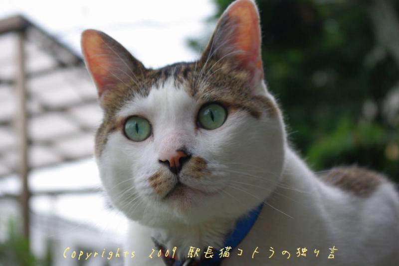 駅長猫コトラの独り言~旧 片上鉄道 吉ヶ原駅勤務~-いい子に