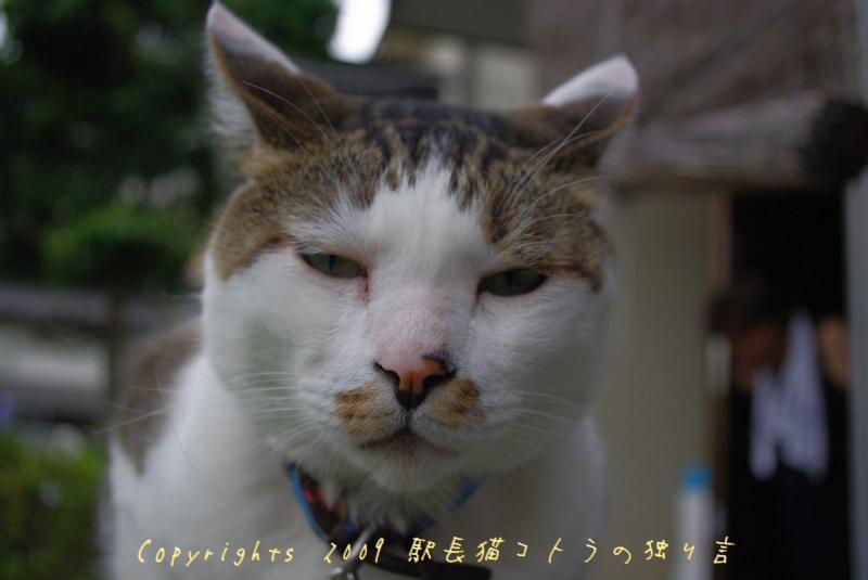 駅長猫コトラの独り言~旧 片上鉄道 吉ヶ原駅勤務~-待ってたのに