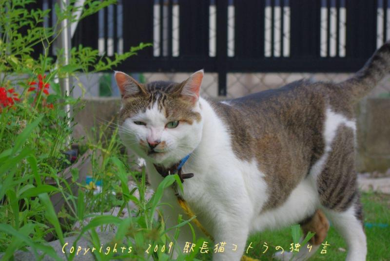駅長猫コトラの独り言~旧 片上鉄道 吉ヶ原駅勤務~-うまうま~~