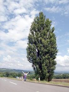 おかずブログ-ケンとメリーの木
