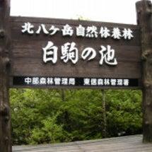 八千穂高原・・・白駒…