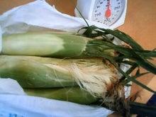 Farm to Kitchen Foods 本来持っている本物の味、安全で美味しい、旬の野菜をお届けします。-神戸コーン