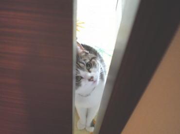 くぅちゃんだって猫である。-覗く2