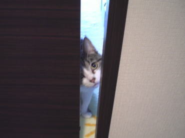 くぅちゃんだって猫である。-覗く1