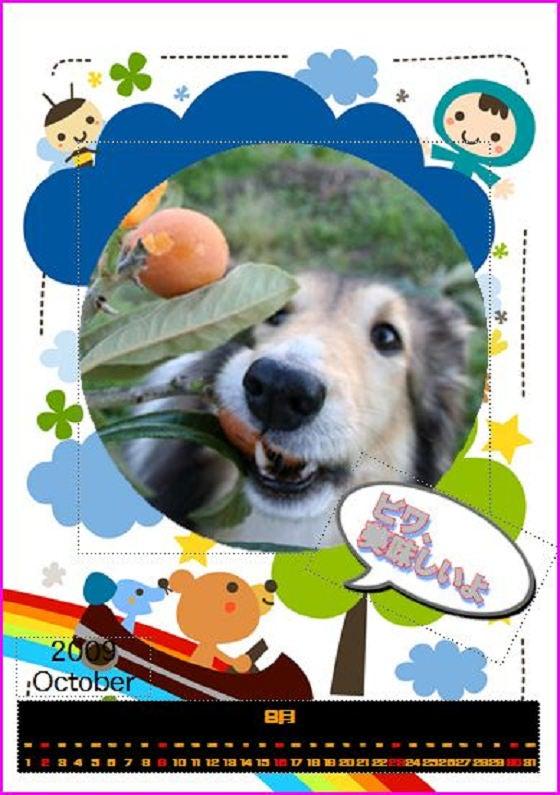 愛犬アン(シェルティー)の成長日記