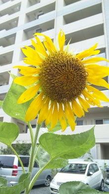 桃華絵里(ももえり)オフィシャルブログpowered by Ameba-090729_140652.jpg