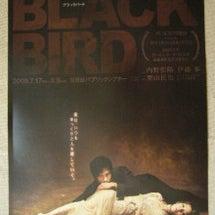 BLACK  BIR…