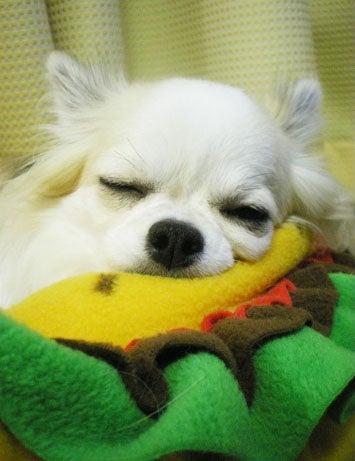 漫画家の犬たち-眠り姫