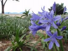 ~菊間に綺麗な花がある場所~