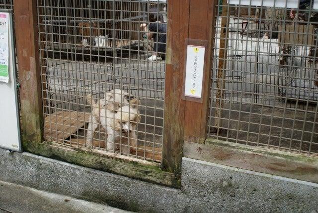 旅犬Lanileaのほほん風船記-河口湖・山中湖へ?