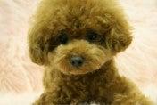 ♪天使ワンコを癒したい。でも天使ワンコ犬に癒されたい♪-STIL0028_ed.jpg