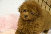 ♪天使ワンコを癒したい。でも天使ワンコ犬に癒されたい♪-STIL0026_ed.jpg