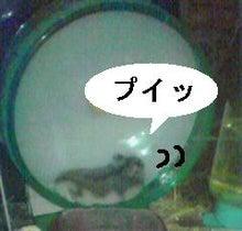 ユキとアオハムの日常-09,08,05-6