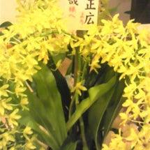 中居ちゃんからお花が…