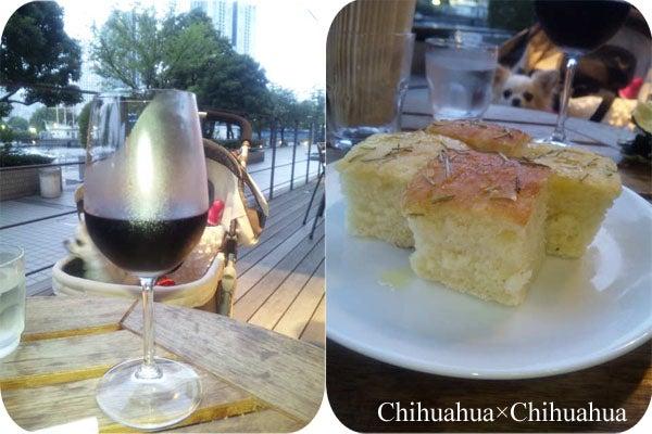 Chihuahua×Chihuahua