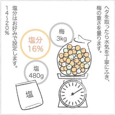 日々の泡・絵日記-うめ03