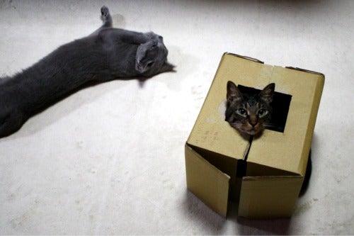 すみれ色の猫たち-fuuhana2