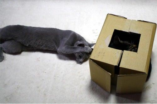 すみれ色の猫たち-fuuhana3