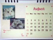 小さな恋の物語 我が家の可愛いハムずと繁殖記録 プラス リチャ・モル-うちの子8月
