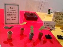 ワークライフバランス 大田区の女性社長日記-ぺこっぱ