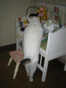 8.9.10…シビル&dodici&Treize-お盆