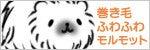 巻き毛ふわふわモルモット-banner