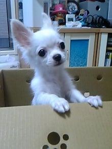 マイム~のブログ      チワワ~S`