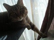 びびん☆こゆっきー ときどき音楽-ネコ達