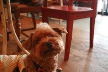 MAX.TAVERN.&DOGS