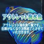 海水魚専門店アクアベル店長公式ブログ-aquabell