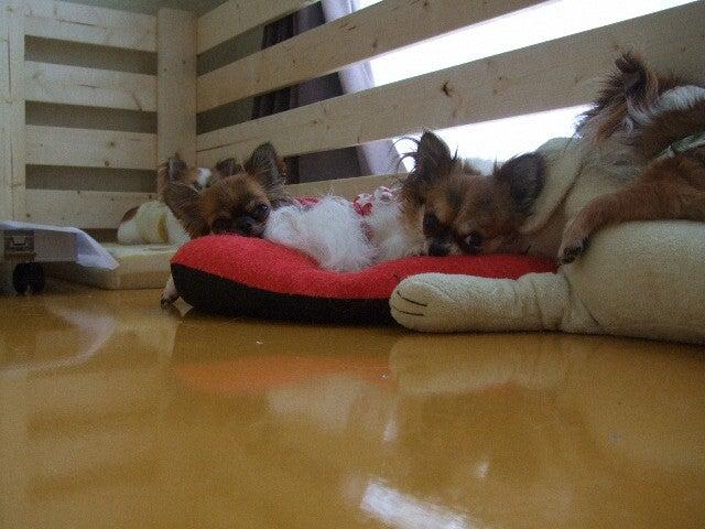 俺と犬と-0139