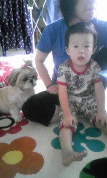飼育放棄犬シーズー春香が教えてくれた、幸せな気持ちになる方法-090720_0845~01.jpg
