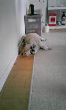 飼育放棄犬シーズー春香が教えてくれた、幸せな気持ちになる方法-090728_1639~01.jpg