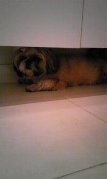 飼育放棄犬シーズー春香が教えてくれた、幸せな気持ちになる方法-090713_1257~01.jpg