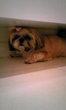 飼育放棄犬シーズー春香が教えてくれた、幸せな気持ちになる方法-090713_1259~01.jpg