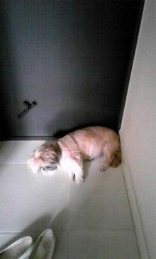 飼育放棄犬シーズー春香が教えてくれた、幸せな気持ちになる方法-090712_1526~01.jpg