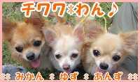 チワワ*わん♪-chiwawa-wan