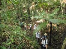 小笠原父島エコツアー情報    エコツーリズムの島        小笠原の旅情報と父島の自然-東平