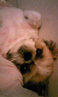 飼育放棄犬シーズー春香が教えてくれた、幸せな気持ちになる方法-090829_1842~01.jpg