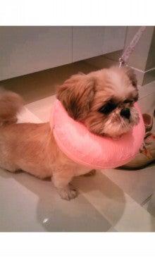 飼育放棄犬シーズー春香が教えてくれた、幸せな気持ちになる方法-SH350210.jpg