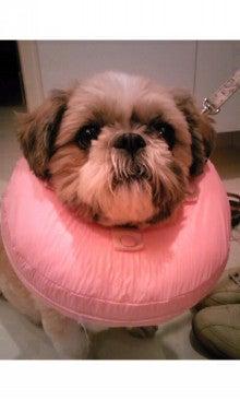 飼育放棄犬シーズー春香が教えてくれた、幸せな気持ちになる方法-SH3502130001.jpg