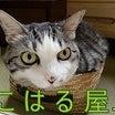 1/16 前編(マメマメ兄弟 入居)