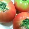 トマトサンド♪の画像