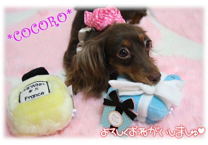 。o*★Chocotan&Cocoro★*o。ちょころん'sのヮンヮン生活