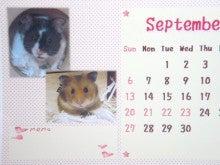 小さな恋の物語 我が家の可愛いハムずと繁殖記録 プラス リチャ・モル-うちのこ9月